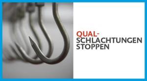 qualschlachtungen_6001-300x165